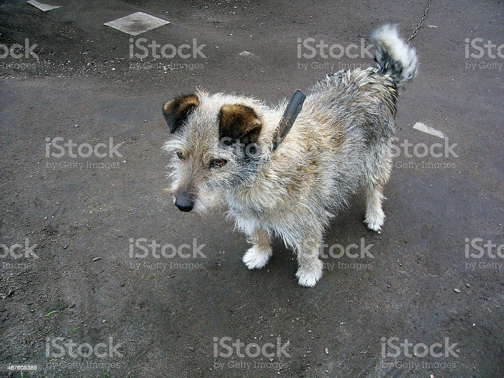 dog object  nature royalty-free stock photo