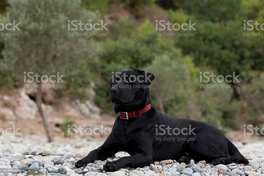 Hund am Strand Lizenzfreies stock-foto