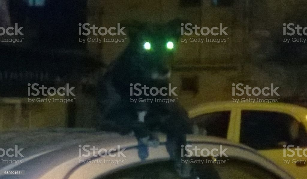 A Dog On A Car stock photo