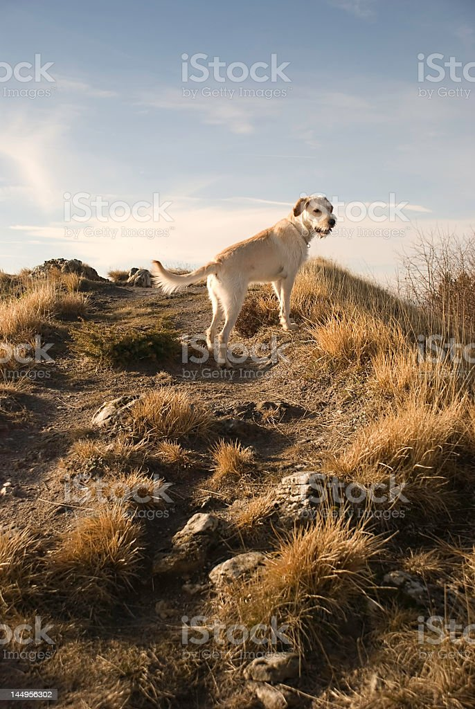 Dog on a hill stock photo
