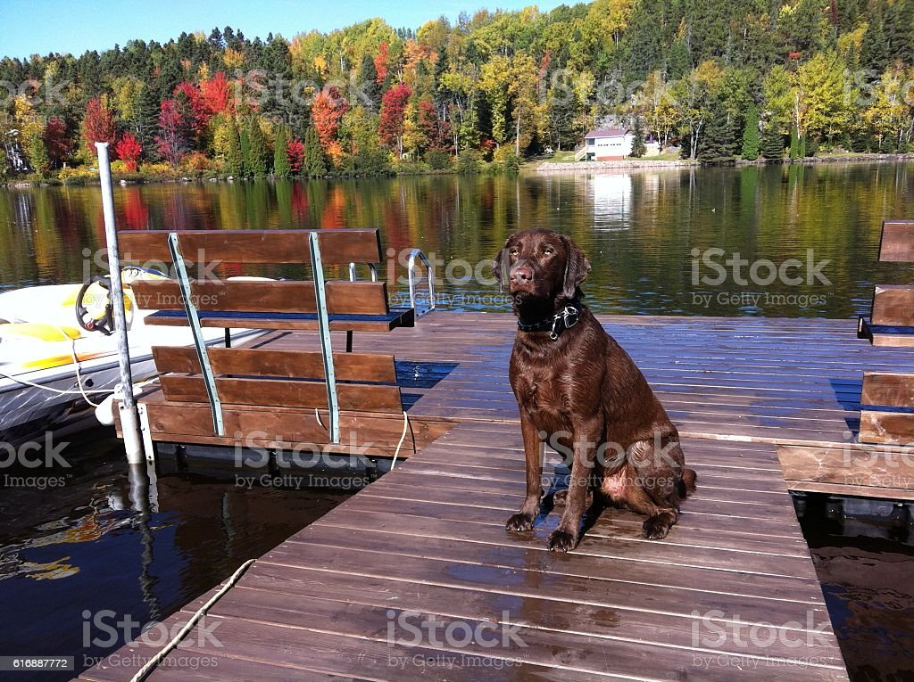 Dog on a lake in a autumn day royalty-free stock photo