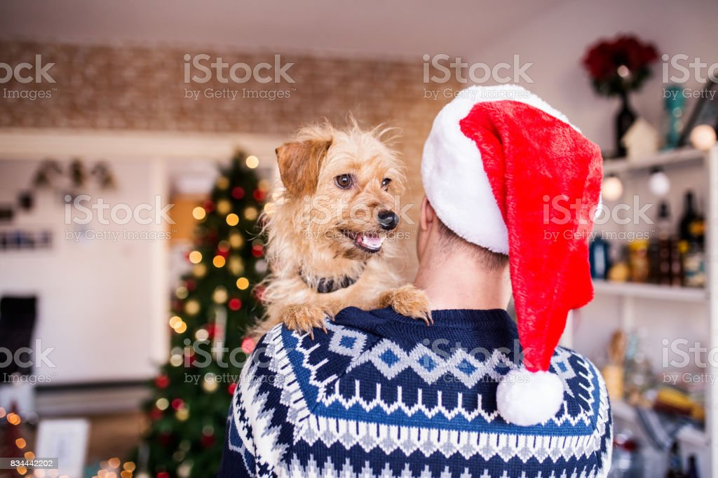 Dog on a man shoulders. Man wearing Santa Claus hat, Christmas, winter stock photo