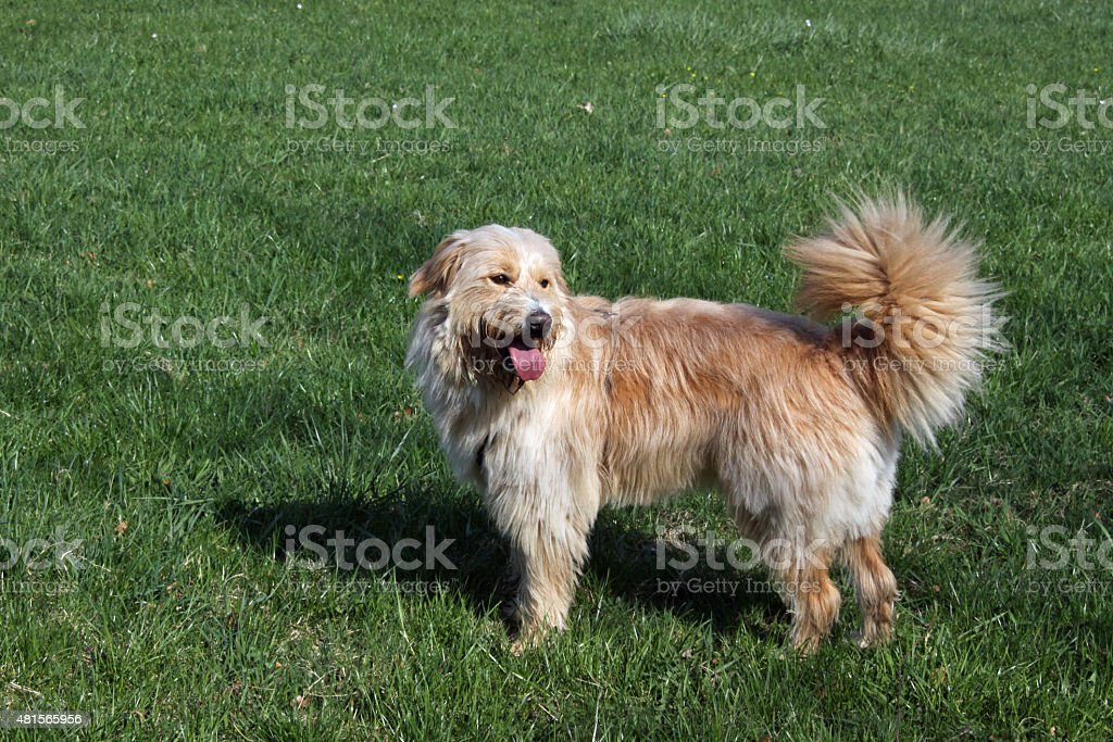 Dog on a meadow stock photo