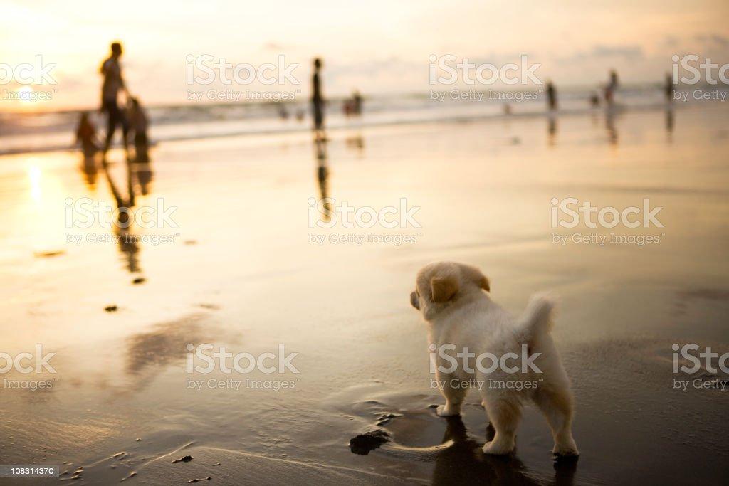 Dog on beach royalty-free stock photo