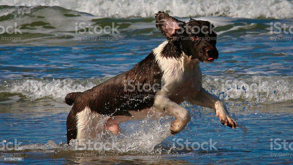 Dog on beach stock photo