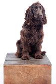 Dog on box
