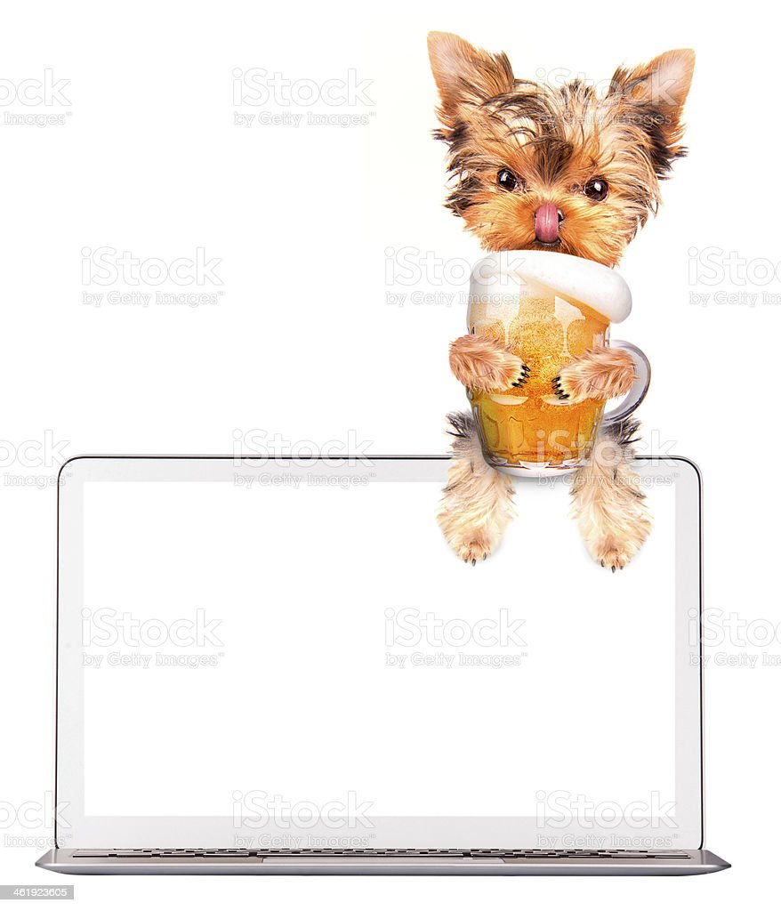 dog on computer with beer stock photo
