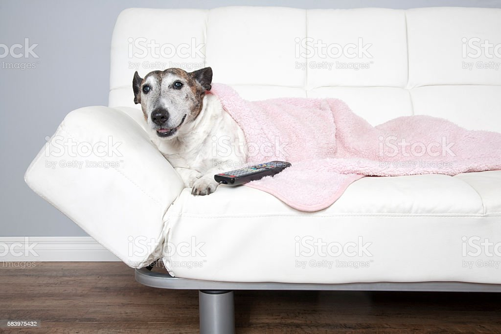 Dog On Couch With Remote stock photo