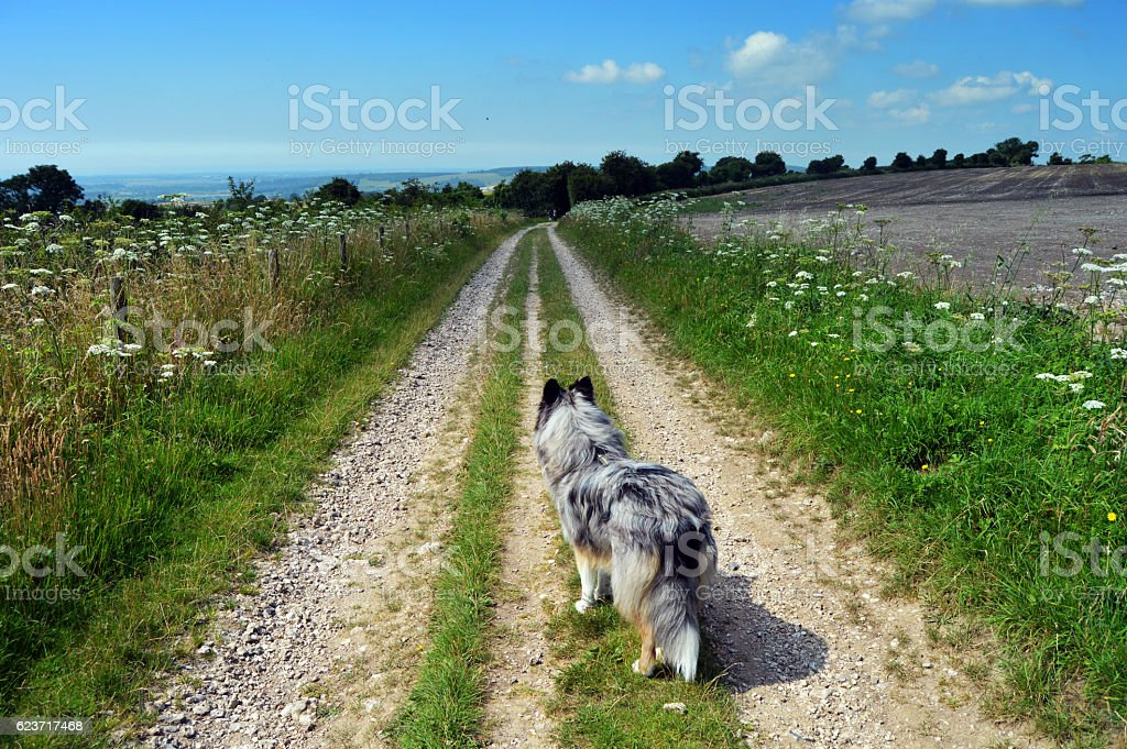 Dog on dirt track road stock photo