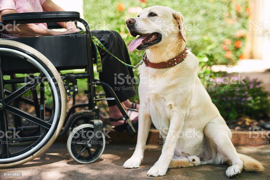 Dog on duty stock photo