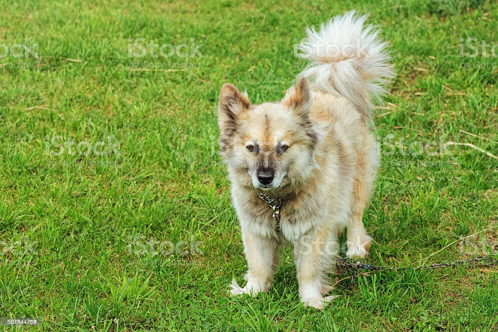 Dog on Grass stock photo