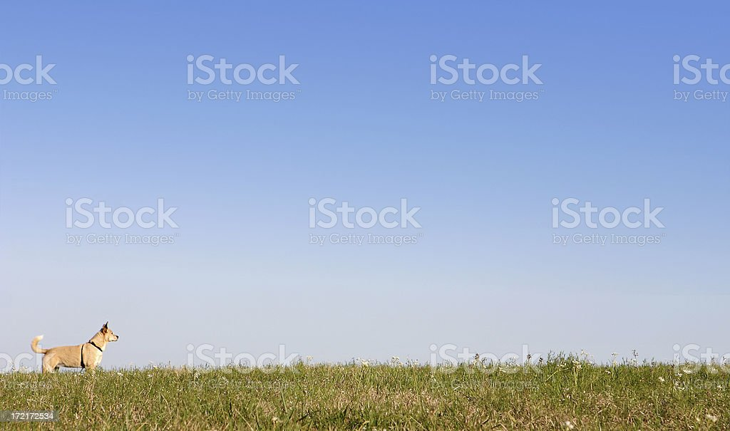 Dog on Grassy Hill and Blue Sky royalty-free stock photo