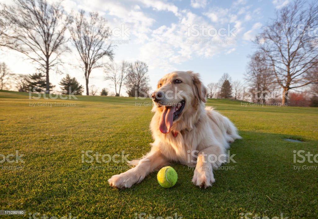 Dog on Green Field stock photo