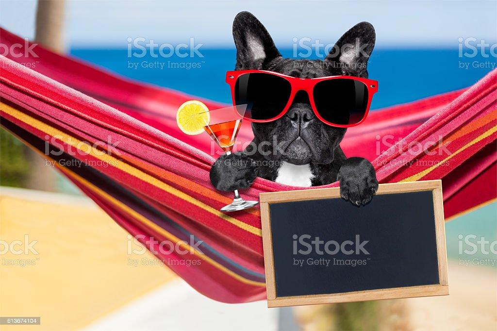 dog on hammock in  summer stock photo