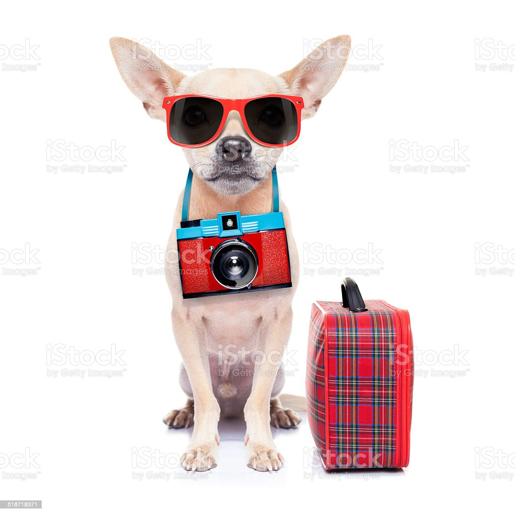 dog on holidays stock photo
