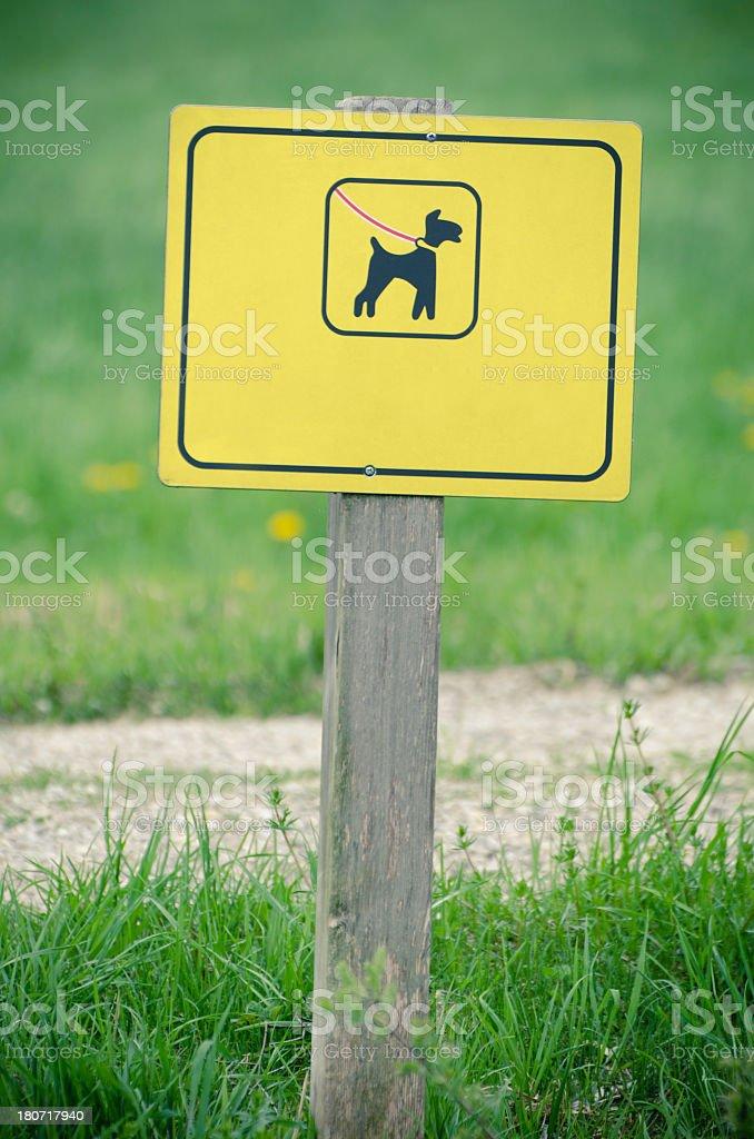 dog on leash shield stock photo