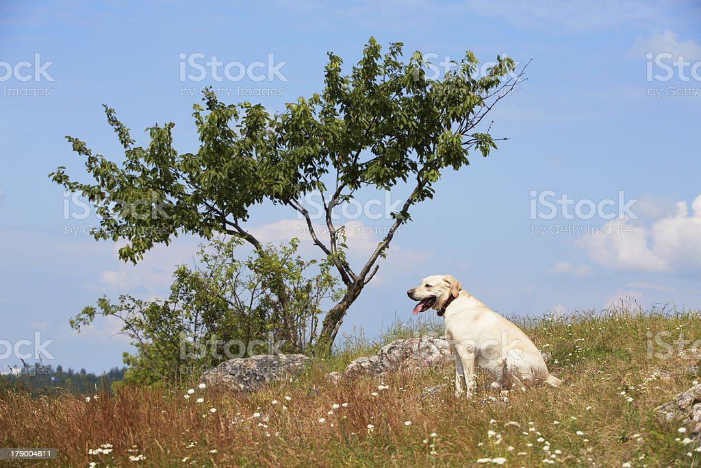Dog on meadow royalty-free stock photo