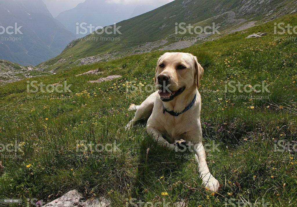 dog on mountain stock photo