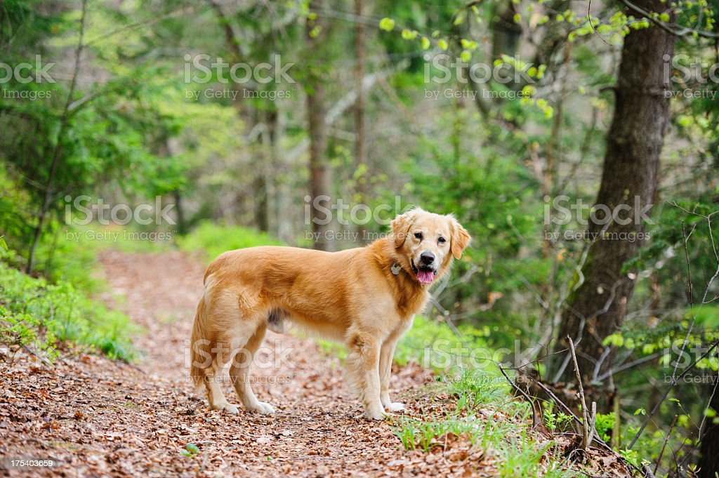 Dog on path stock photo