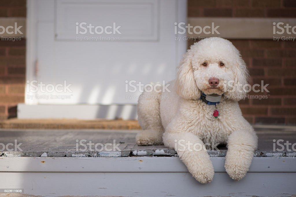 Dog on Porch stock photo