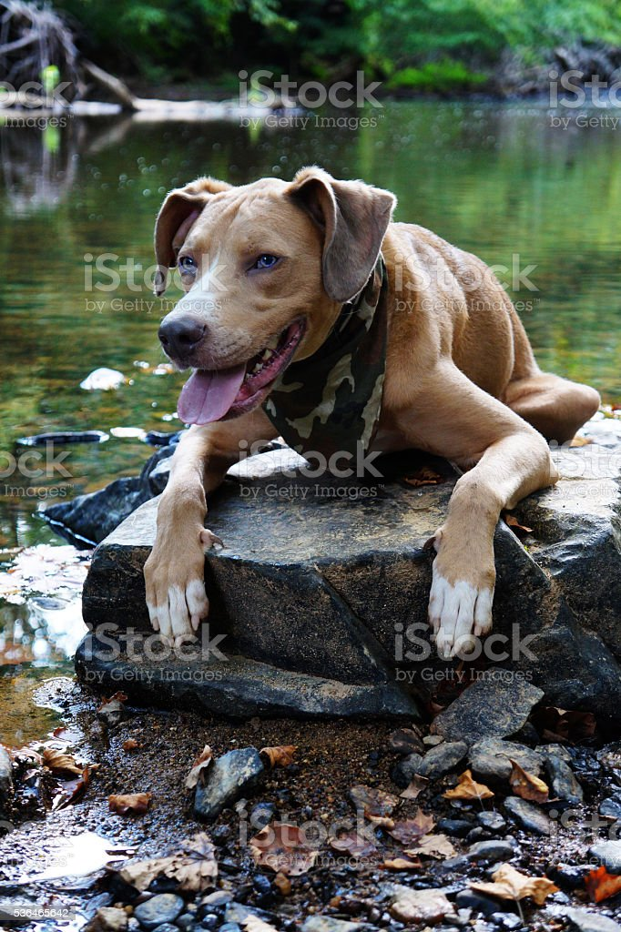 Dog on Rock by River Hiking stock photo