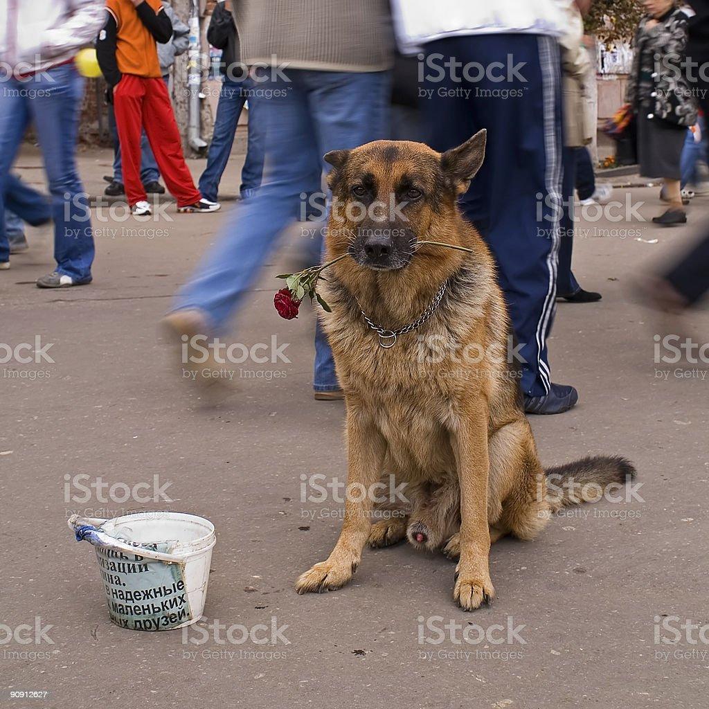 Dog On Street royalty-free stock photo