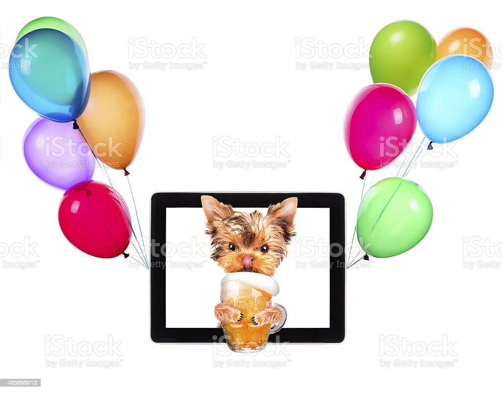 dog on tablet with beer and balloons stock photo