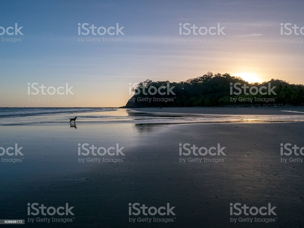 Dog on the beach royalty-free stock photo
