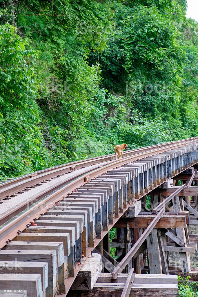 Dog on the Death Railway bridge at Krasae Cave stock photo