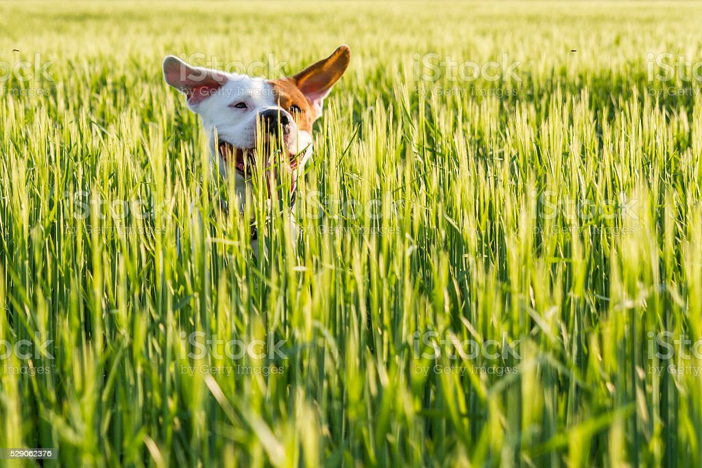 Dog on the field stock photo