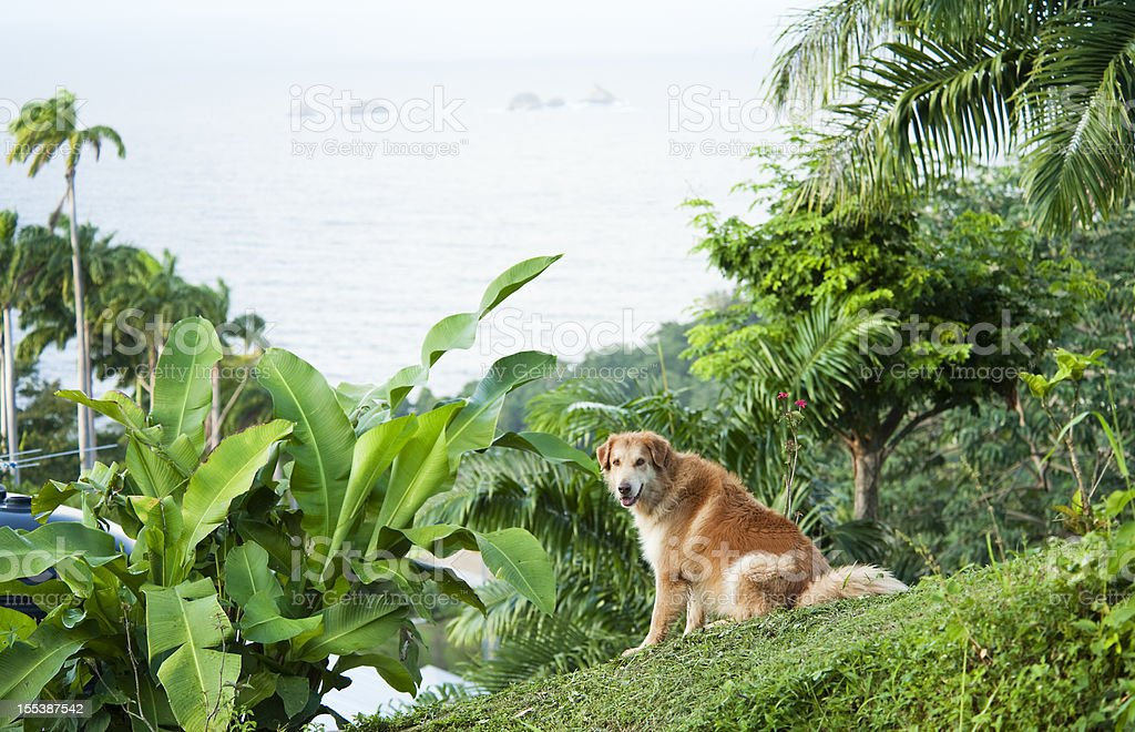 Dog on the Hill stock photo