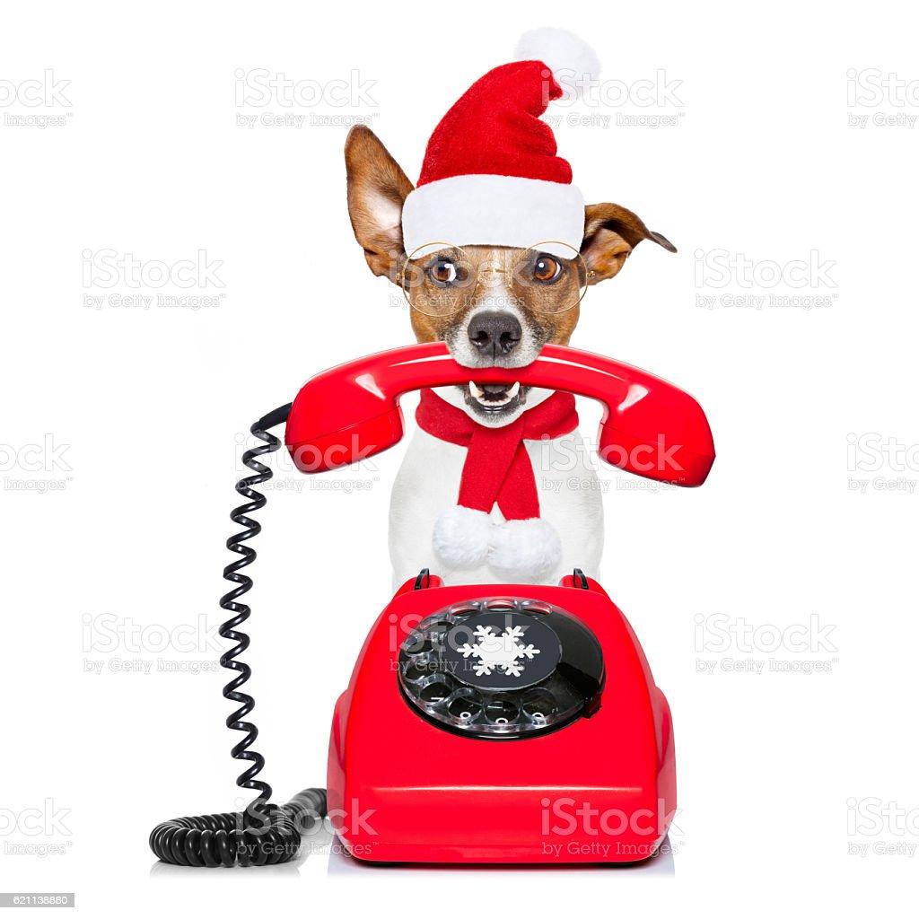 dog on the phone christmas santa hat stock photo