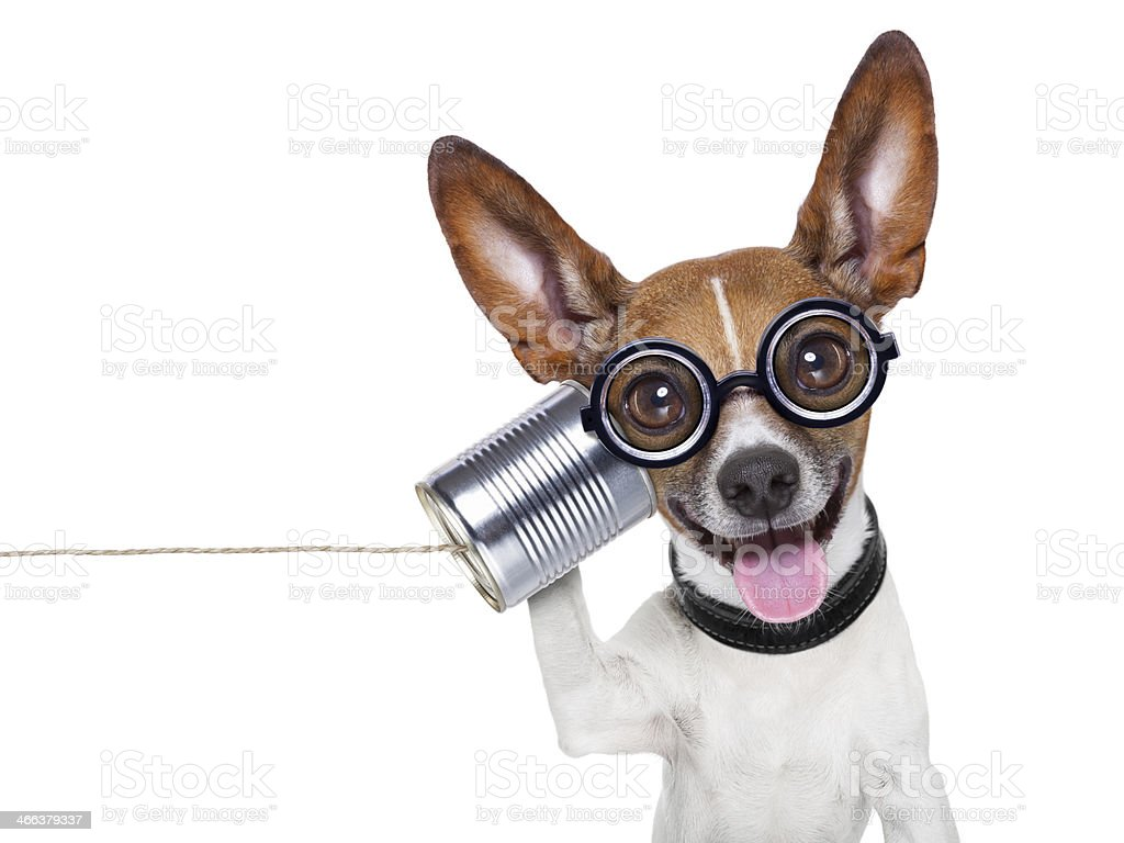dog on the phone royalty-free stock photo