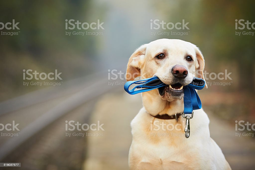 Dog on the railway platform stock photo