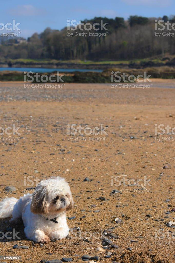 Dog on the sand stock photo