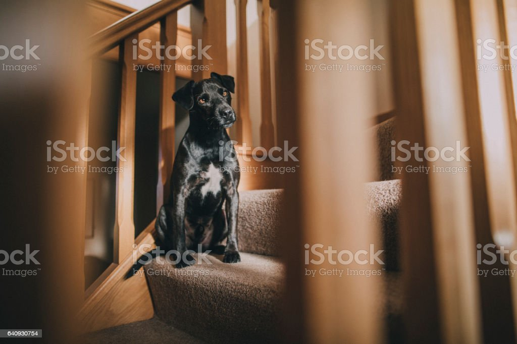 Dog on the stairs stock photo