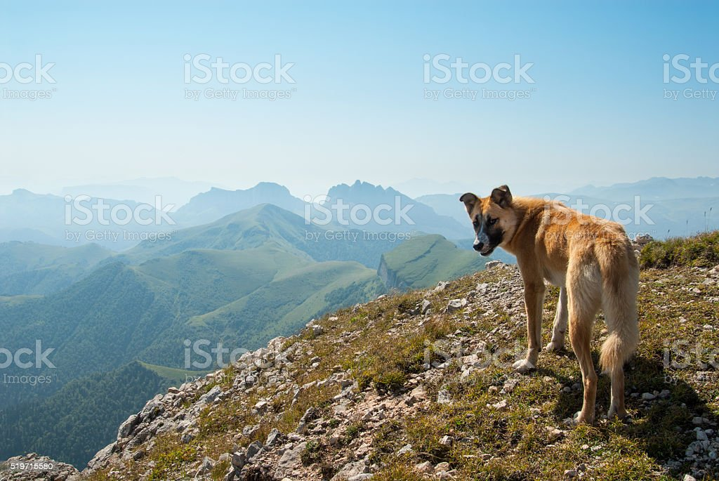 Dog on the top of Big Tkhach mountain, Acheshbok mountain stock photo