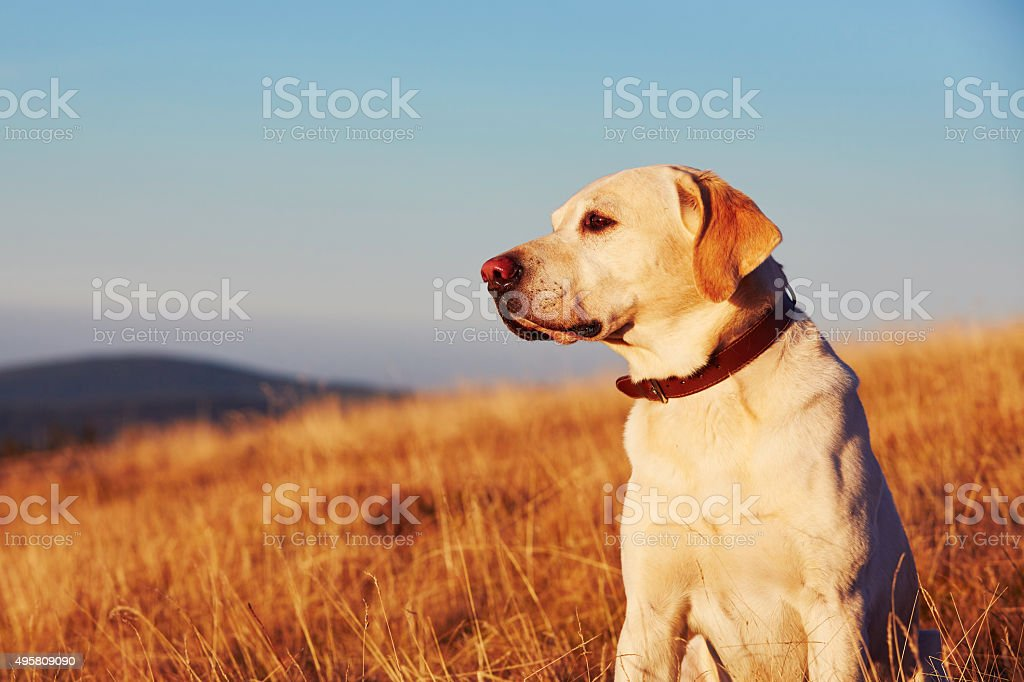 Dog on the trip in mountains stock photo