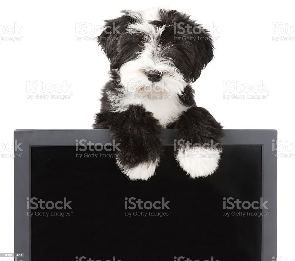 dog on top of a blackboard royalty-free stock photo