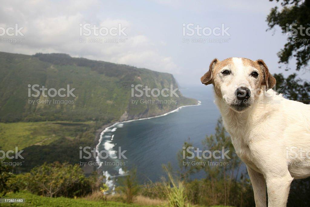Dog on Vacation stock photo