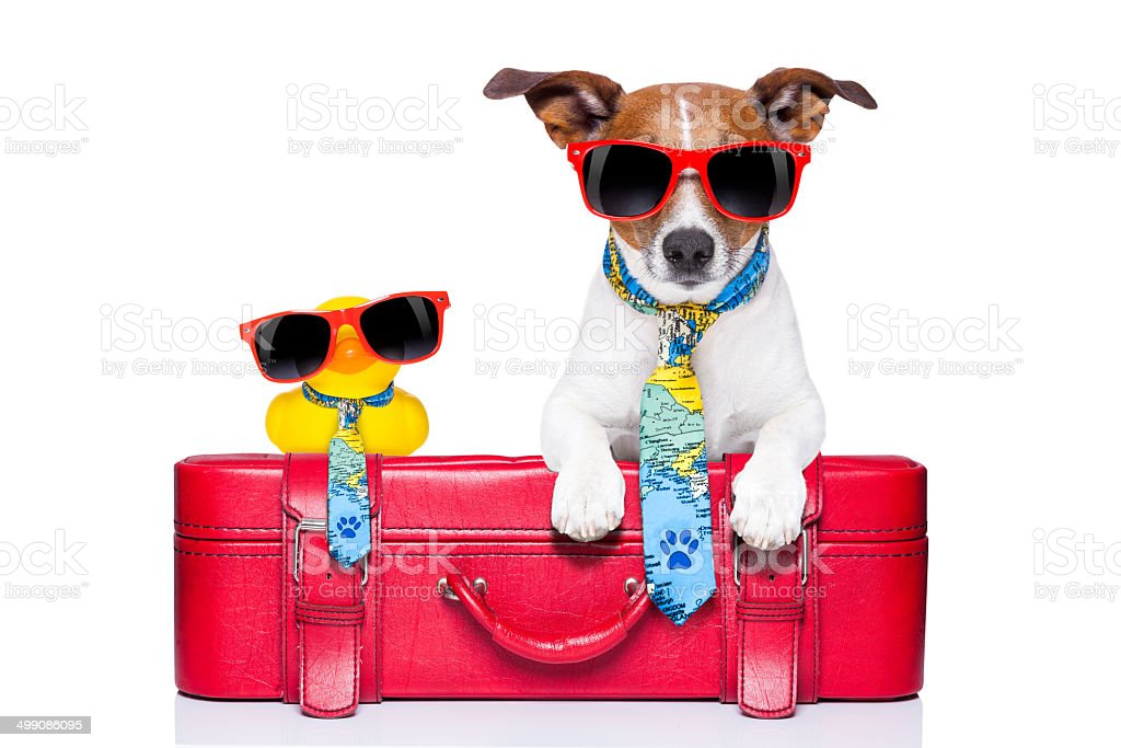 dog on vacation stock photo