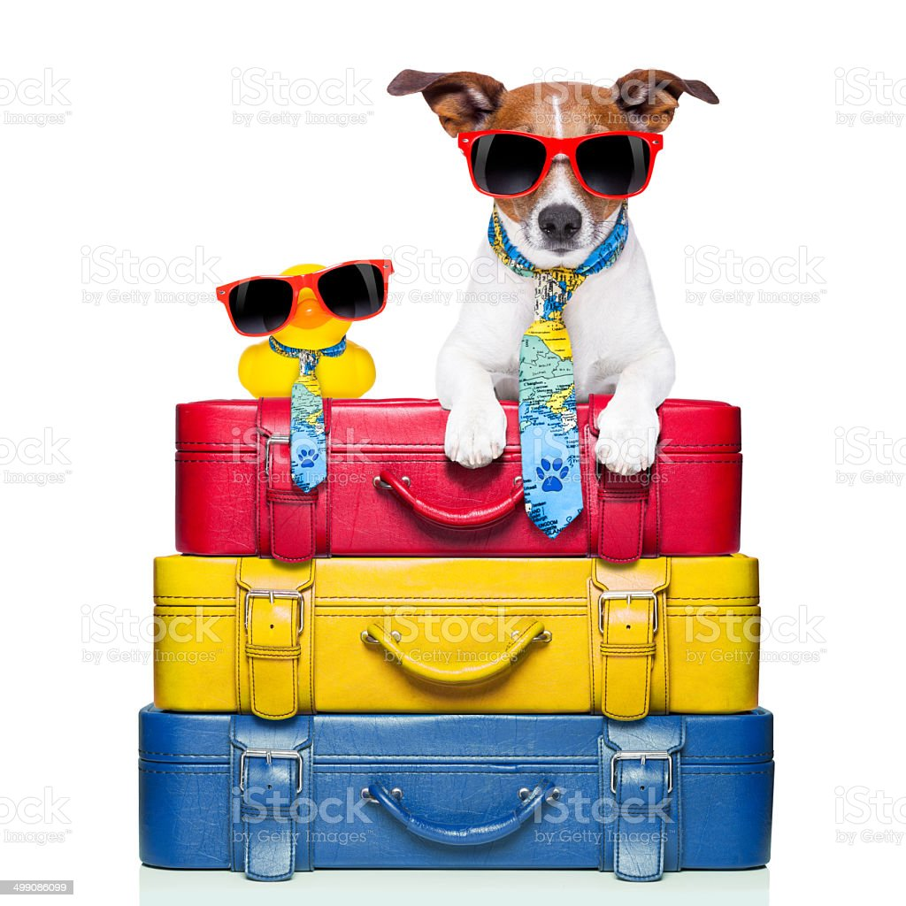 dog on vacation royalty-free stock photo