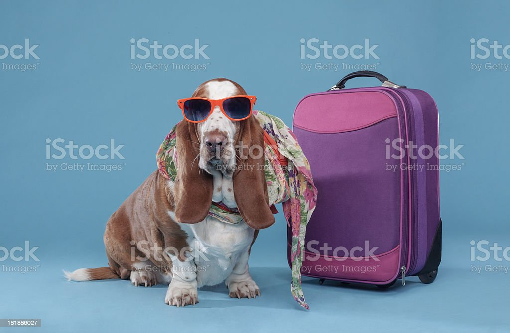 Dog on vacations stock photo