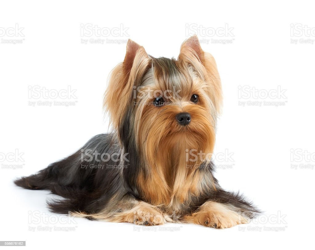 Dog on white background stock photo