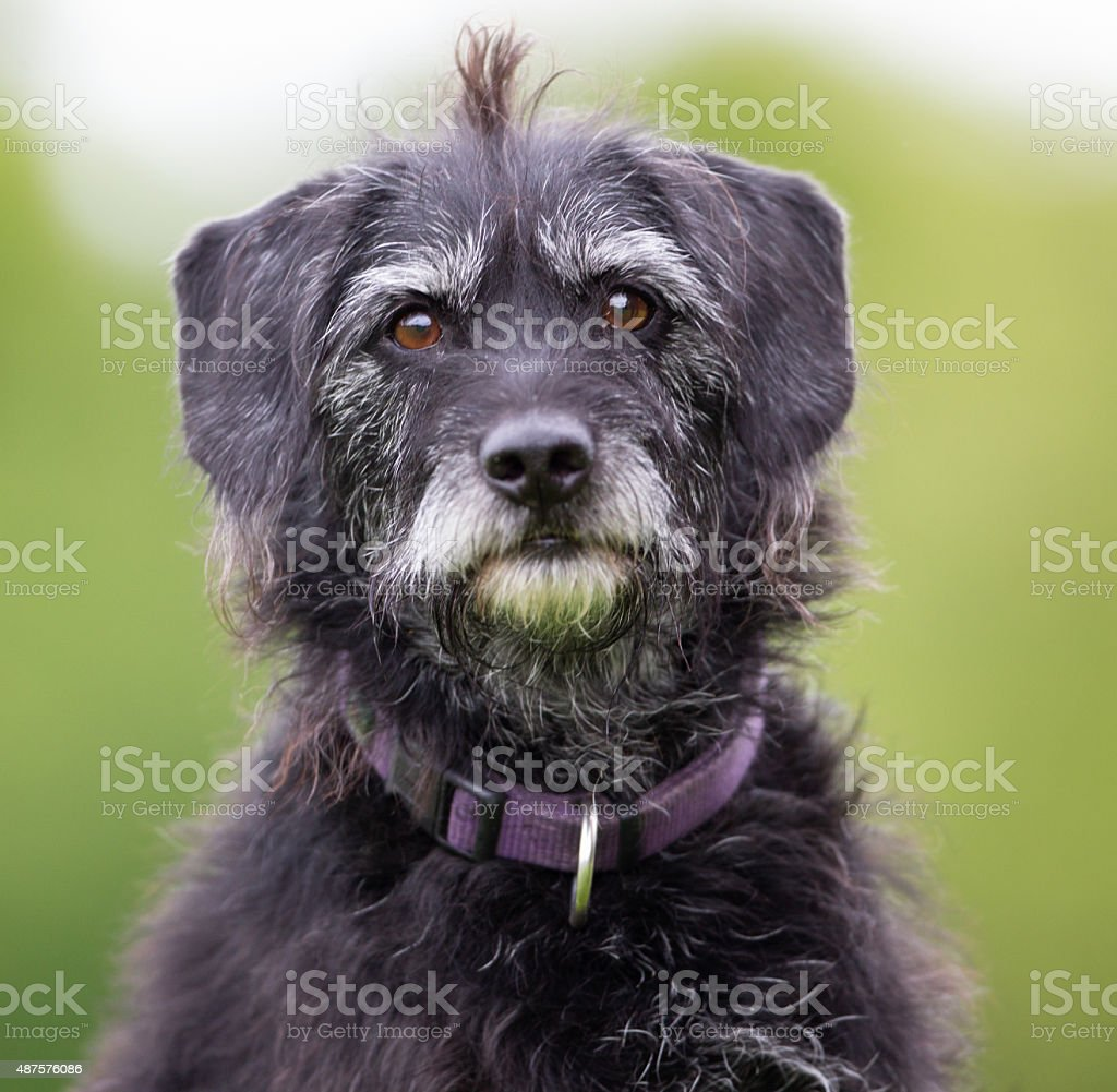 Dog outdoors in nature stock photo