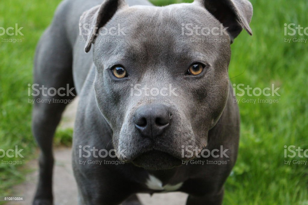 Dog Outdoors stock photo