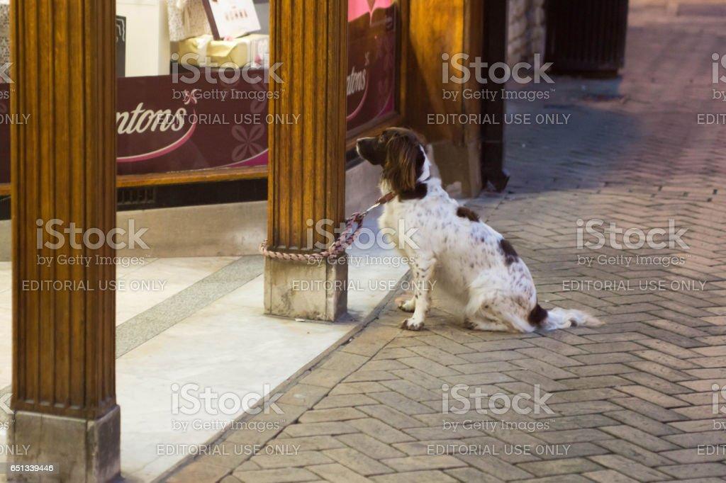 Dog outside a sweetshop stock photo