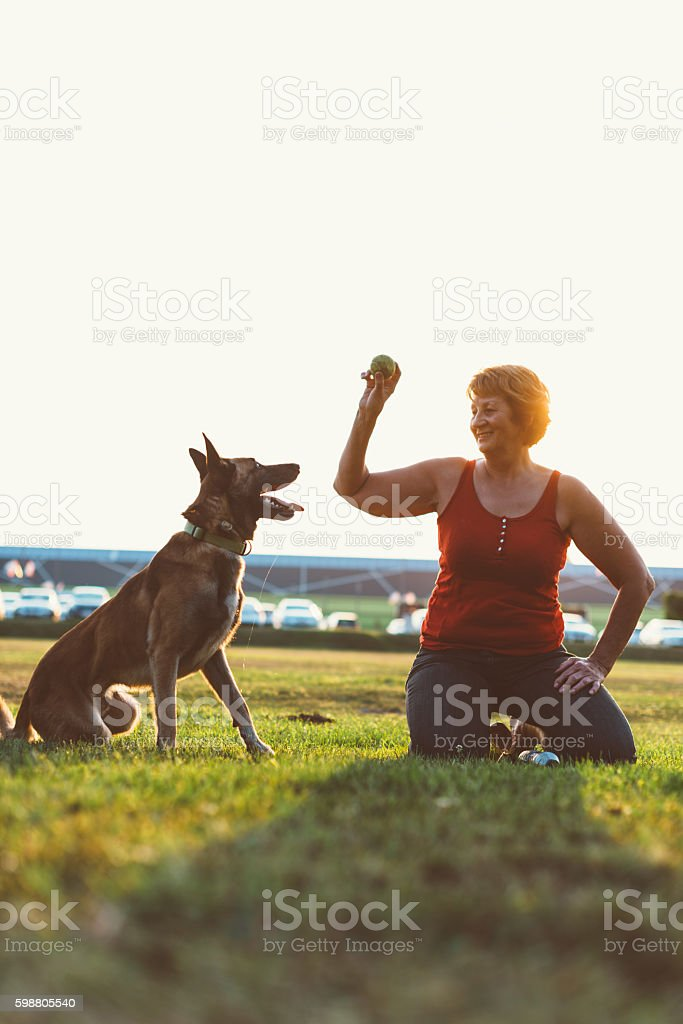 Dog owner playing with her Malionis dog stock photo