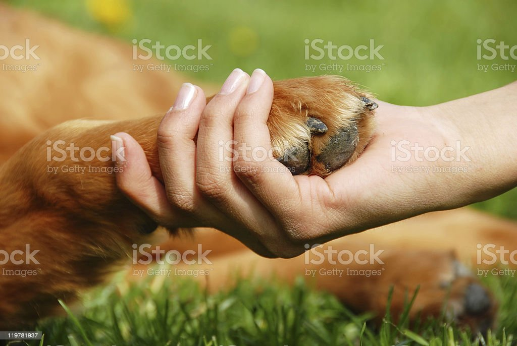Dog paw and hand shaking stock photo