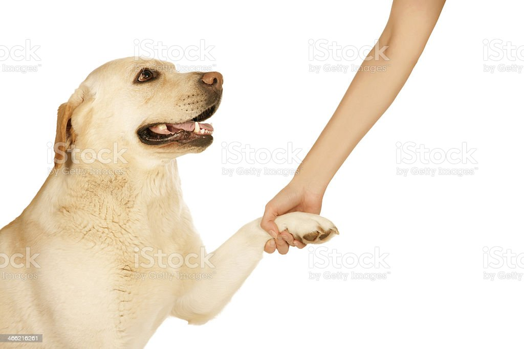 Dog paw and human hand royalty-free stock photo